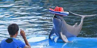 عالم الدلافين في مدينة بتايا-